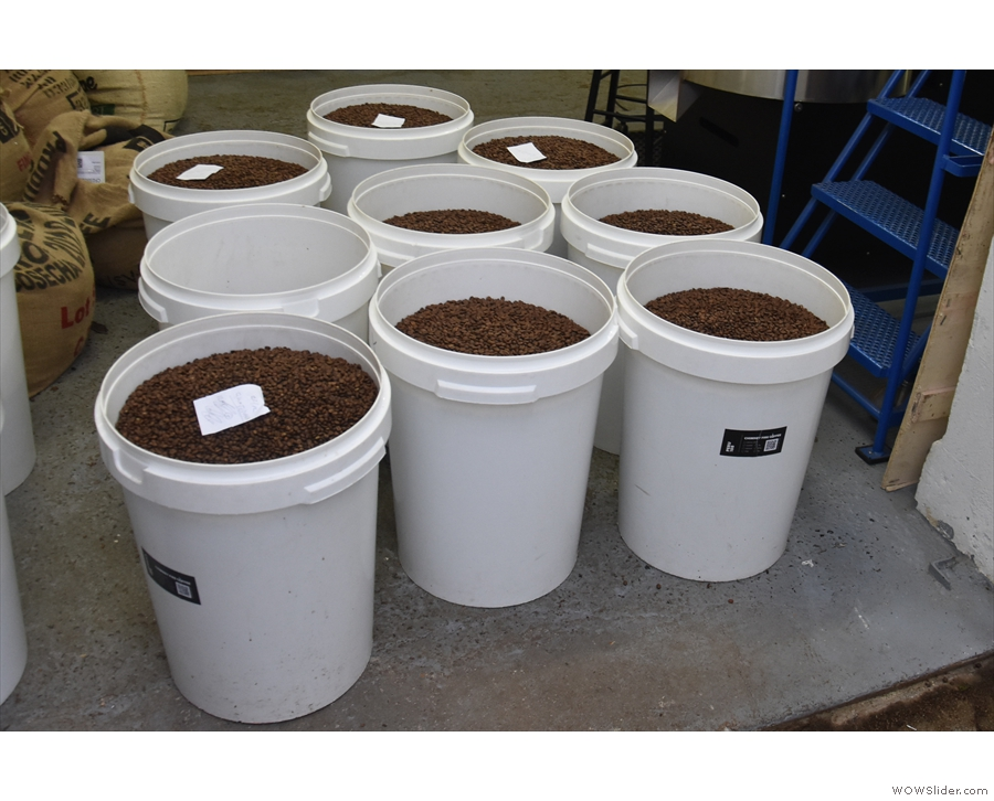 Once the beans have been roasted, they are stored in the white bins before bagging.