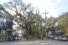 ... getting as far as Esplanade Avenue, a tree-lined thoroughfare...