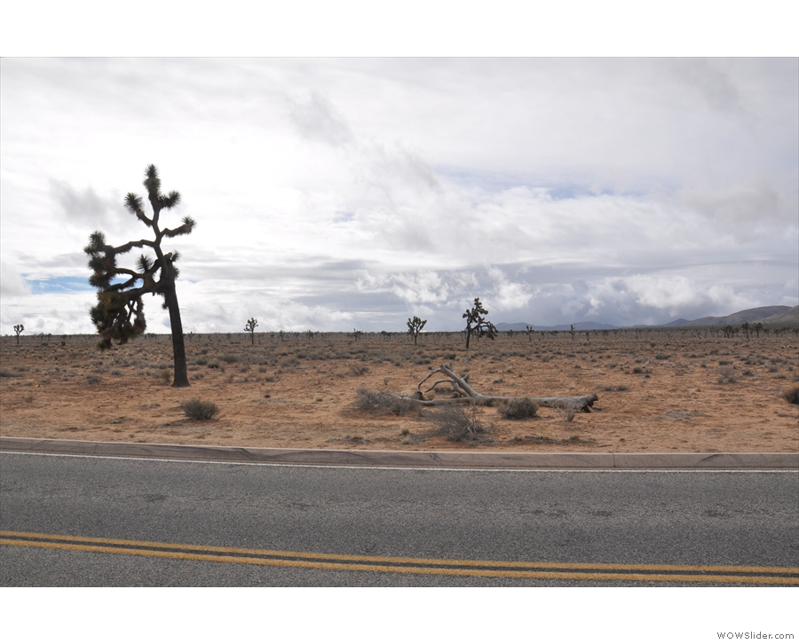 The Joshua trees were closer on the other side of the road.