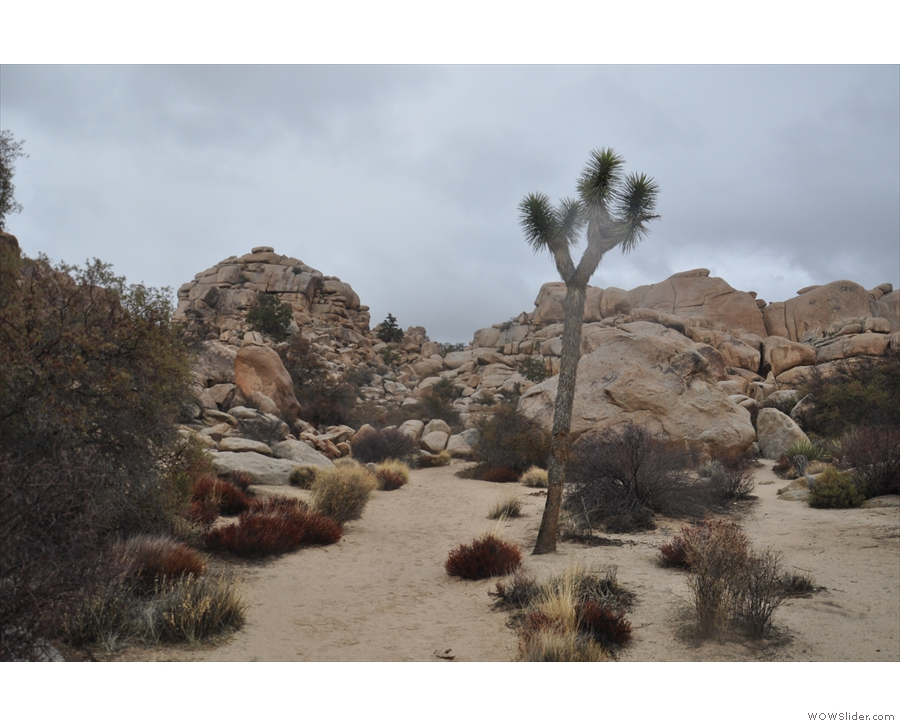 I'll leave you with one final Joshua tree before I get back to the car.