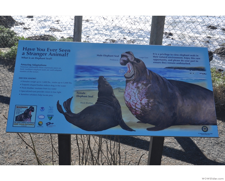 ... I had come to see the Elephant Seals.