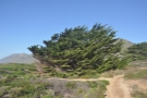 ... beach, past some very windswept trees!