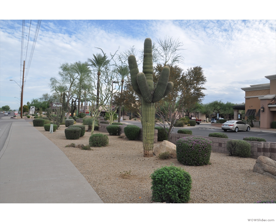 Phoenix is basically built in the desert, particularly Scottsdale, where I was staying.