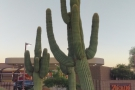 There were cacti on virtually every corner. Big ones too.