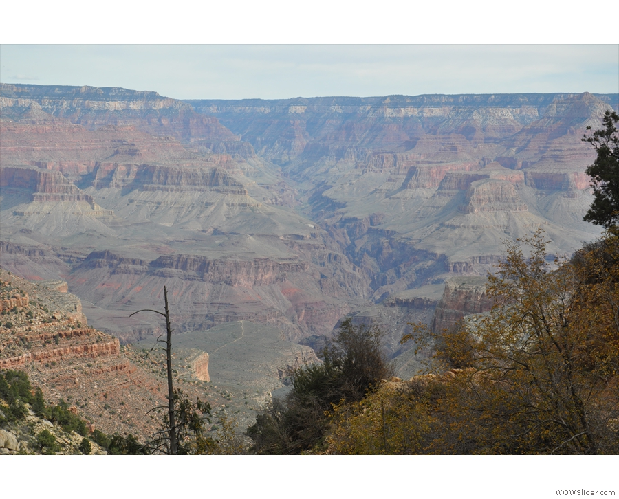 ... bottom and this is Plateau Point (to the right of a blackened tree trunk).