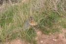 Wildlife! A rare sighting!