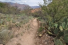 Indian Garden extends for around 400 m, with the trail running through it.