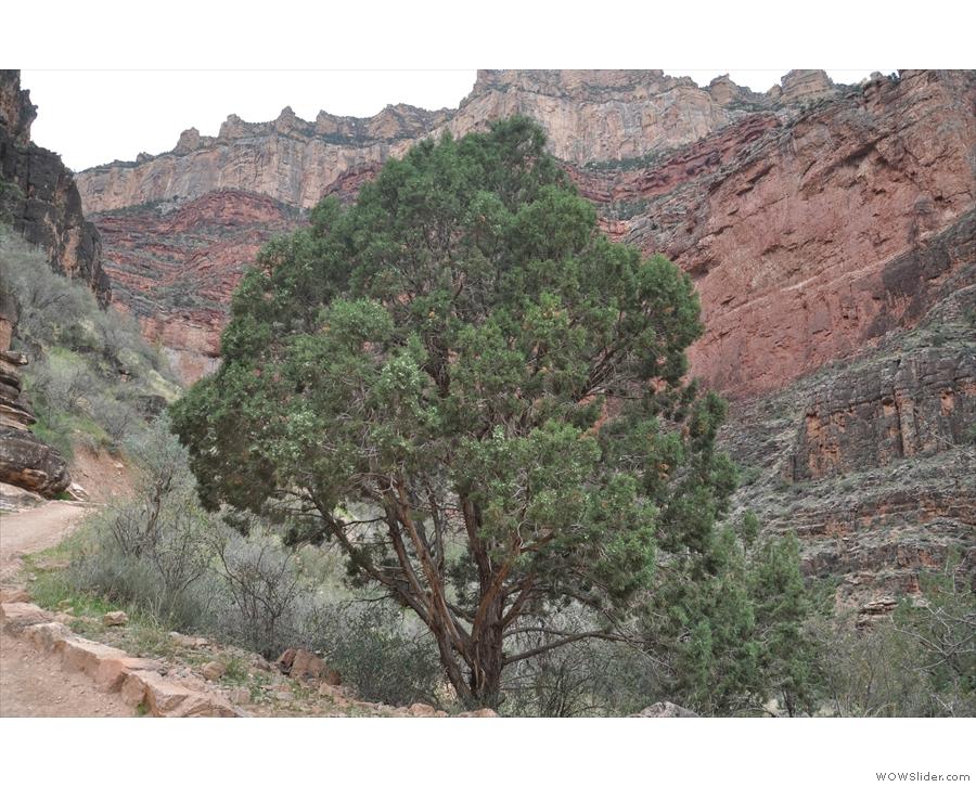 Nice tree.