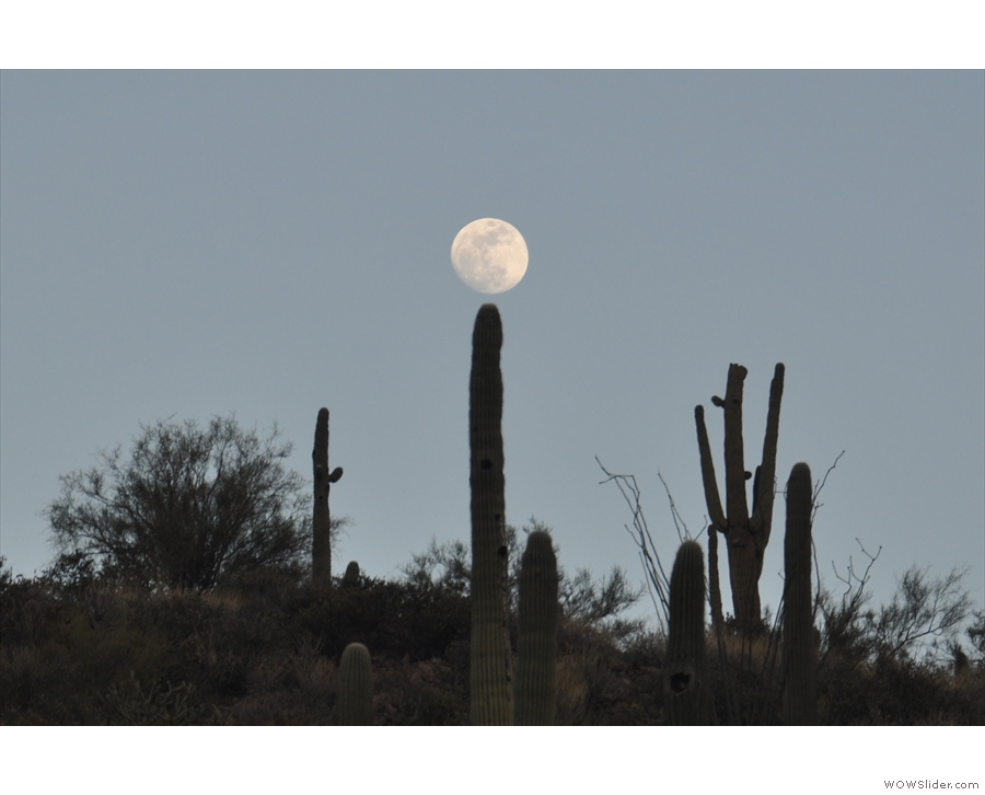 It's not often you see the full moon balancing on top of a cactus.