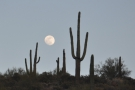 ... because I spotted the full moon rising over the side of the valley.