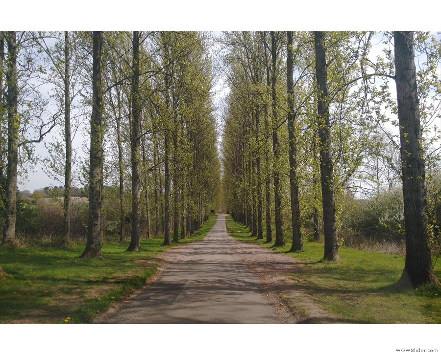 The approach to Umberslade Farm/Espresso Farm is down this long, tree-lined avenue...