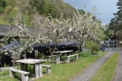 ... in amongst the apple trees. There are two four-person picnic tables...