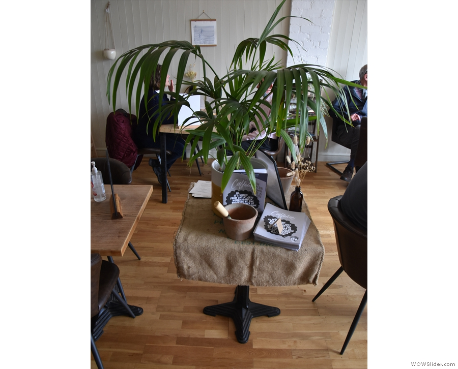 The two are separated by this table with a large potted plant.