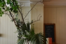 ... before seeming to merge with this plant on the left!