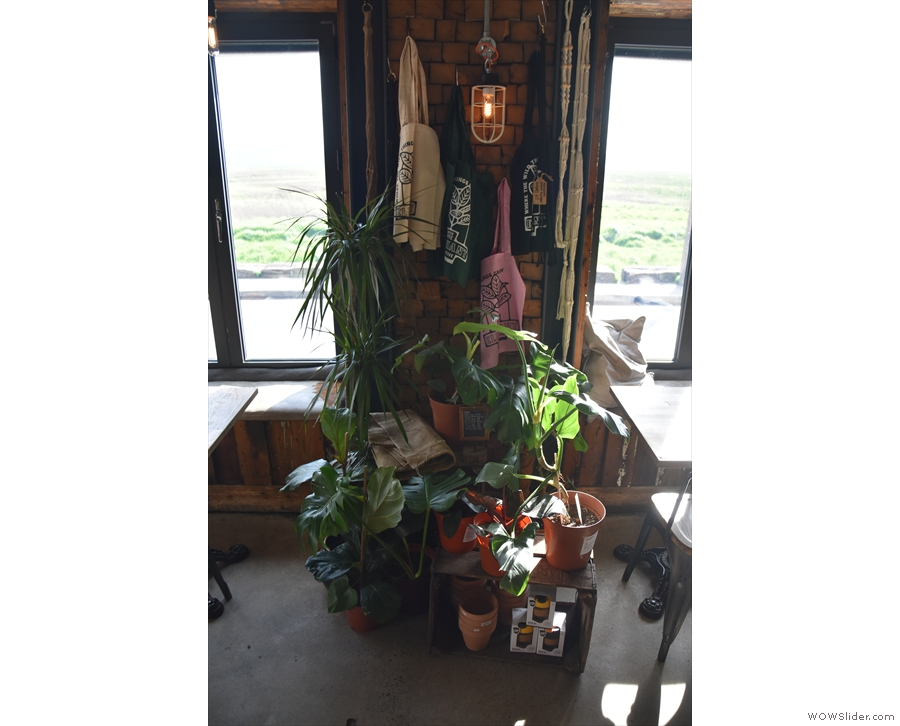 To ensure separation, there's a neat set of plants between the tables in the windows.