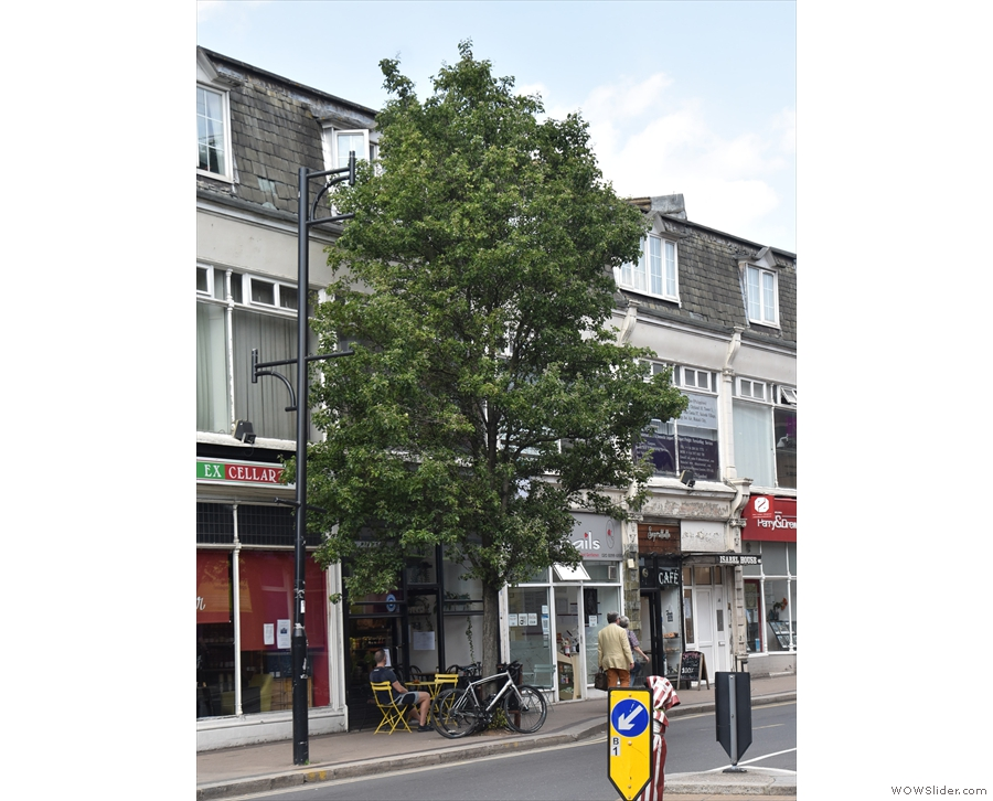 At the end of Victoria Road in Surbiton, a certain coffee shop hides behind a solitary tree.