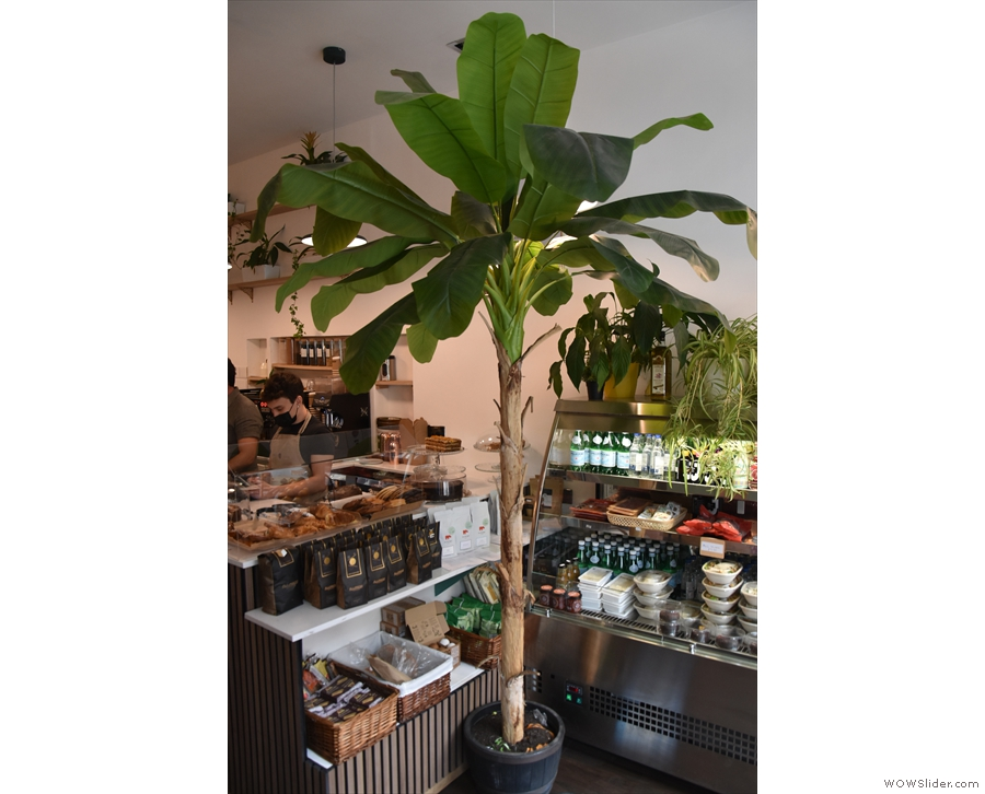 ... plus a potted palm tree (I think) by the counter.