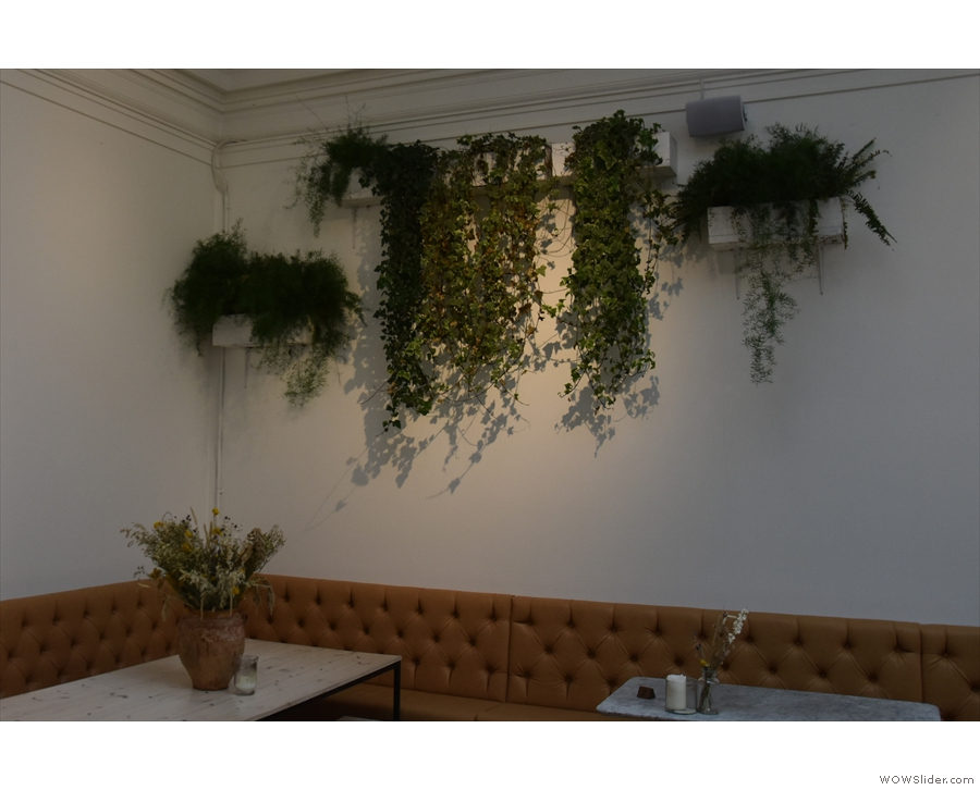 There are more plants hanging on the walls of Medicine...