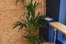 Although there's a lot of brick and chipboard, Garden Social has plenty of plants too.