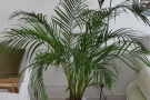 Although the decor is predominantly white, there are plenty of potted plants like this one.