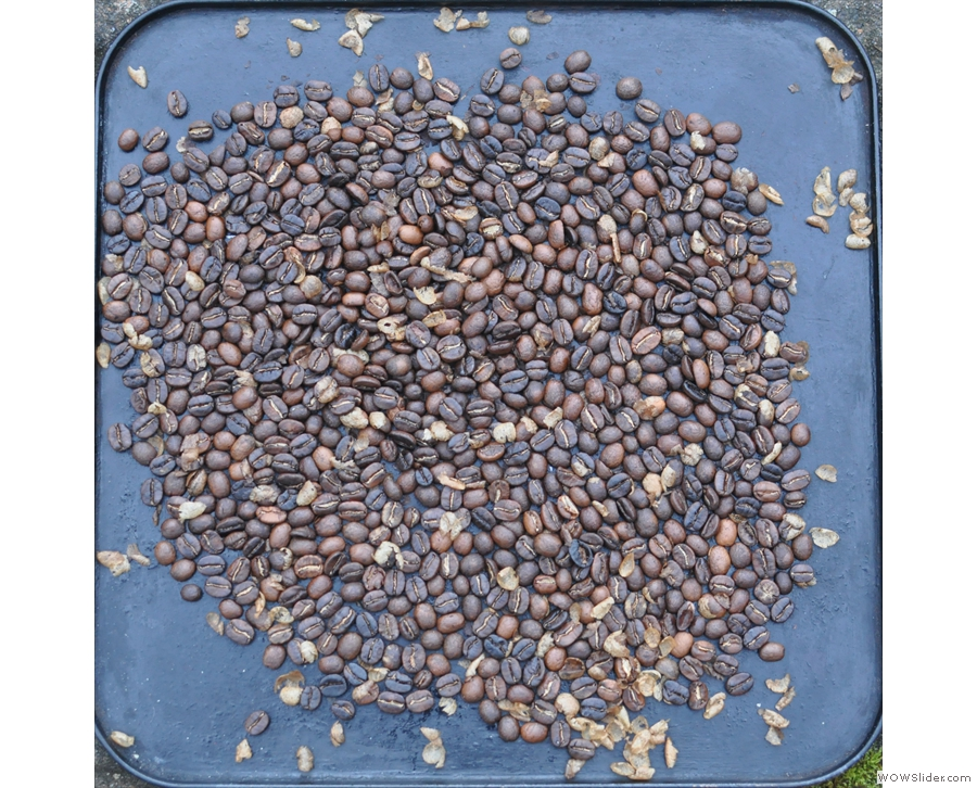 A minute later and the beans are spread out on a tray and cooling outside.