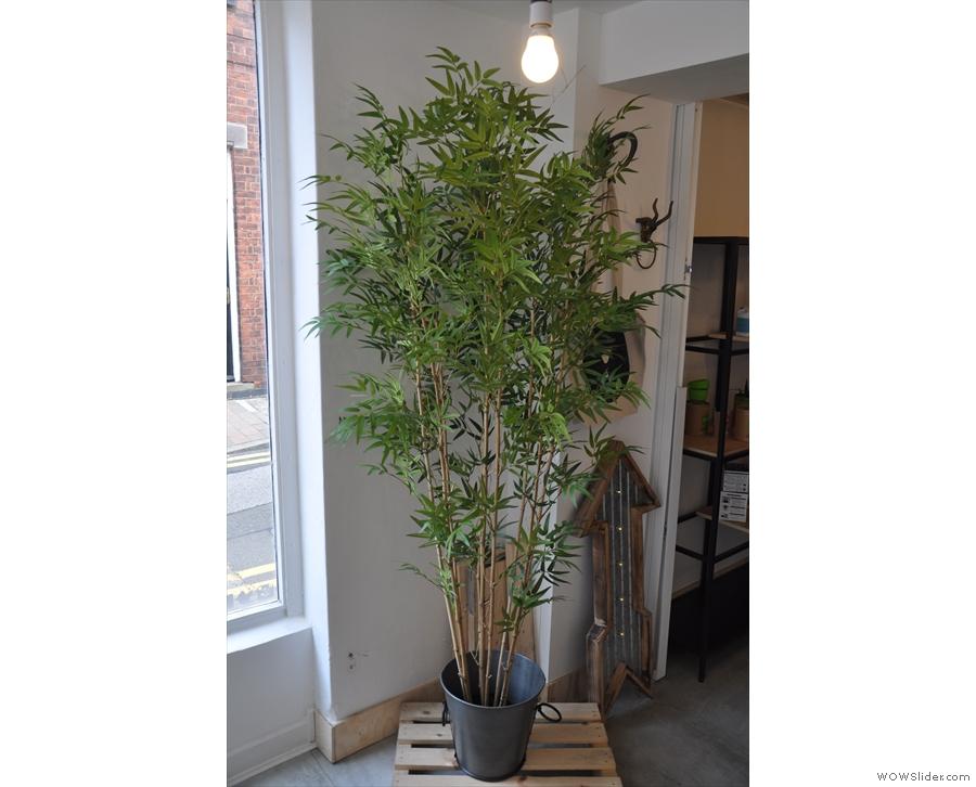 More plants!