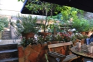 The third row of the terrace, as seen from my table. The different rows are well screened by the plants, giving the terrace a more intimate feel.